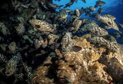 Polynésie - Tuamotu - Fakarava - Croisière Aquatiki