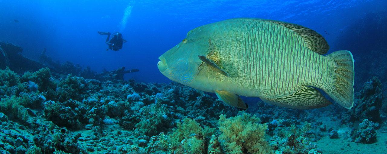 Agence de rencontres beaucoup de poissons ICP talent Matchmaking