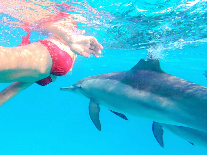 Croisière Dauphin en Mer Rouge avec Valérie Valton - Nager avec les dauphins