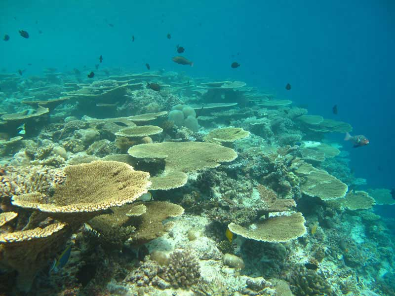 Maafushi village , Maldives les séjours plongée Spots d'Evasion Voyage