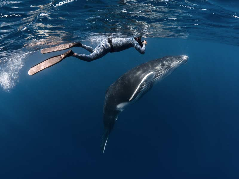 Nager avec les baleines de Polynésie avec Valérie Valton de Dolphinesse © Tahiti Tourisme - Greg Lecoeur
