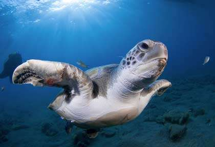 Tortue aux Canaries