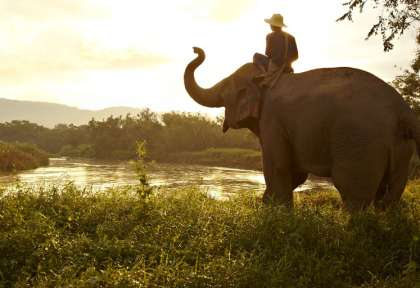 Chiang Rai - Thaïlande © Anantara Golden Triangle Elephant Camp and Resort