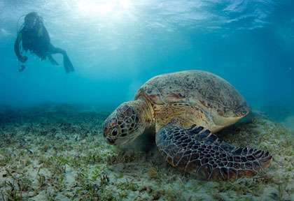 Tortue en Egypte