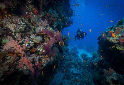 plongée St Johns Reef