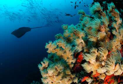 Malpelo © Coiba Dive Expedition