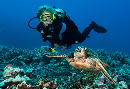 Plongee et tortues © Kona Agressor